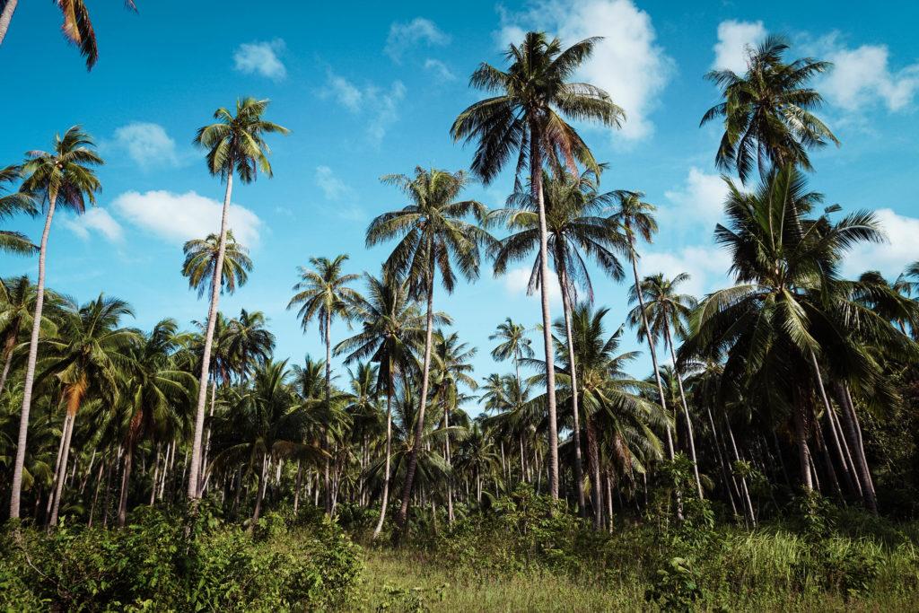 Koh Phangan, Jungle
